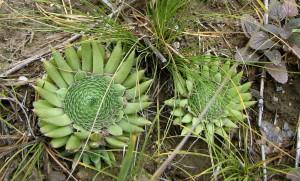 Южный склон с остепненной разреженной растительностью в окр. н.п. Аникино. Характерные местоолючего