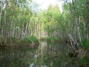 памятник природы «Озерно-речная система «Польто»_р_Язевая